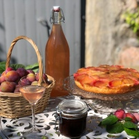 Plommonskörd - våra bästa recept med plommon
