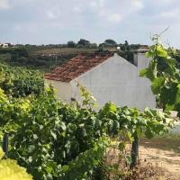 Quinta da Lapa - växande vingård i Ribatejo, Portugal
