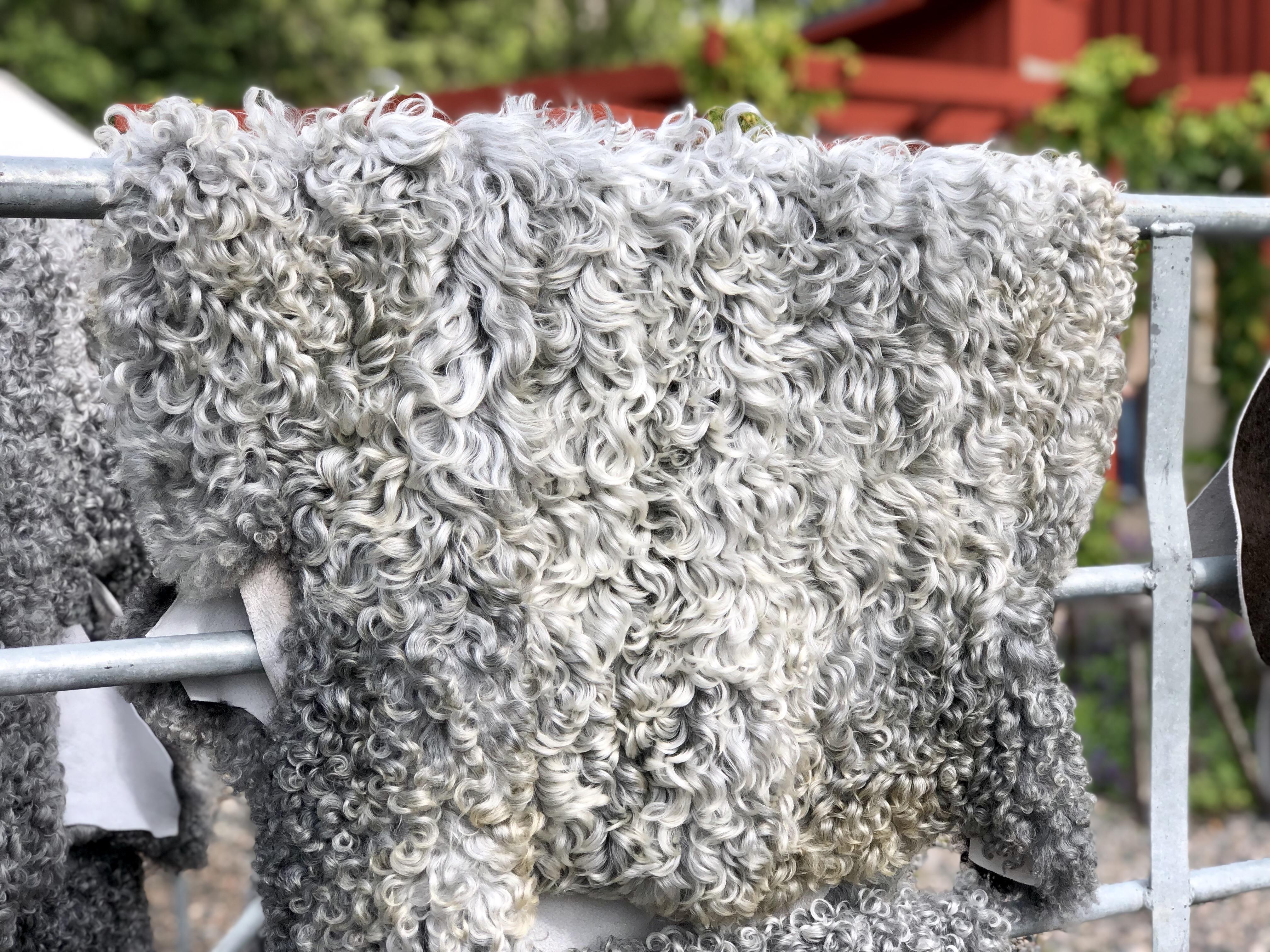 Ändebol fårskinn lammskinn gotlandsfår